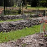 Gardening: What to do when the soil stays too wet